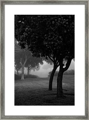 Trees In The Midst 1 Framed Print