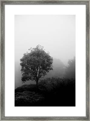 Trees In The Midst 2 Framed Print