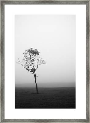 Trees In The Midst 4 Framed Print