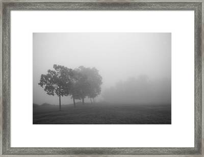 Trees In The Midst 5 Framed Print