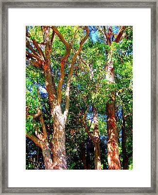 Trees In The Nearby Bush Framed Print by Gordana Stankovic