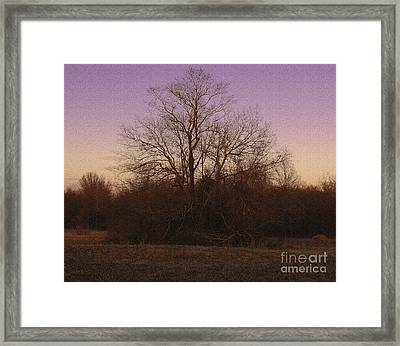 Trees In The Setting Sun Framed Print by R McLellan