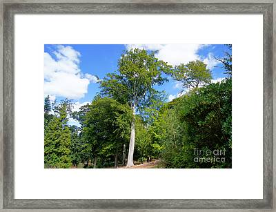 Trees In The Sky Framed Print by Jonathan Steward