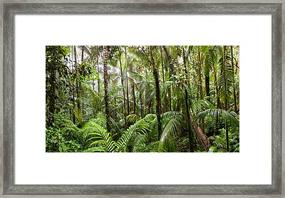 Trees In Tropical Rainforest, Eungella Framed Print by Panoramic Images