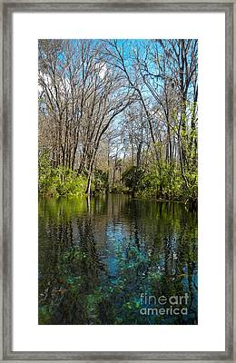 Trees In Water Framed Print