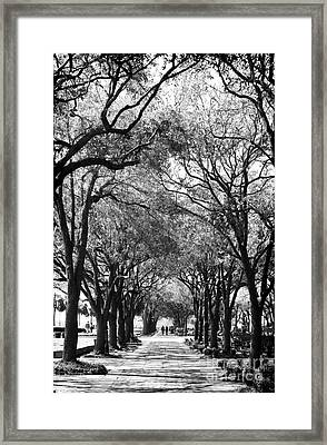 Trees In Waterfront Park Framed Print by John Rizzuto