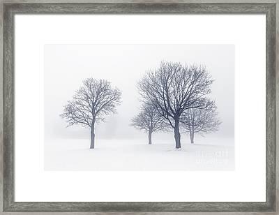 Trees In Winter Fog Framed Print