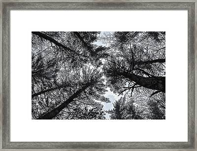 Trees In Winter Framed Print