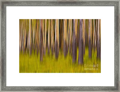 Trees Framed Print by Jerry Fornarotto