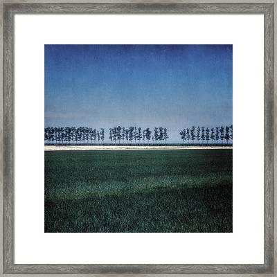 Trees Framed Print by Joana Kruse