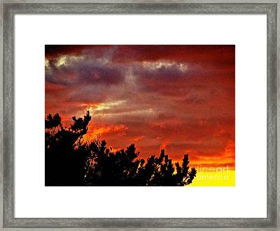 Trees Knowing The Sky Framed Print by Q's House of Art ArtandFinePhotography