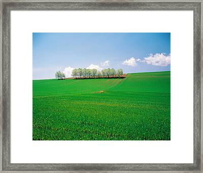 Trees Lined In Crop Field With Sky Framed Print by Panoramic Images