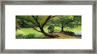 Trees Near A Pond, Central Park Framed Print by Panoramic Images