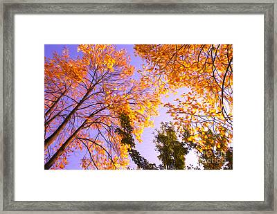 Trees Framed Print by Nur Roy