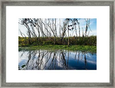 Trees Of Alligator Swamp Framed Print by Ellie Teramoto