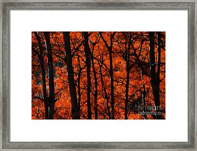 Trees Of Autumn Framed Print by Bob Christopher