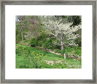 Trees Of Early Spring Framed Print