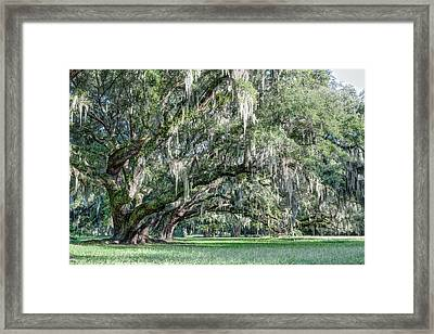 Trees Of Magnolia Framed Print