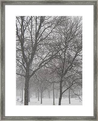 Trees Of Silence Framed Print