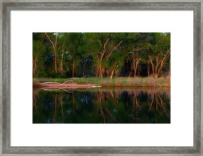 Trees Of The Lake Framed Print by Darren  White