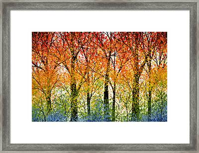 Trees Of The Rainbow Framed Print by Amy Giacomelli