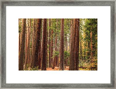 Trees Of Yosemite Framed Print
