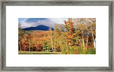 Trees On A Field In Front Framed Print by Panoramic Images