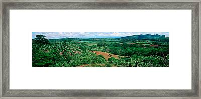 Trees On A Hill, Chamarel, Mauritius Framed Print