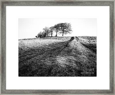 Trees On A Hill Framed Print by John Farnan