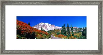 Trees On A Hill, Mt Rainier, Mount Framed Print by Panoramic Images