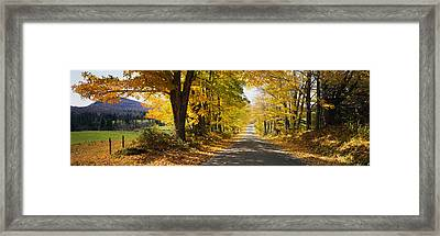 Trees On Both Sides Of A Road, Danby Framed Print by Panoramic Images