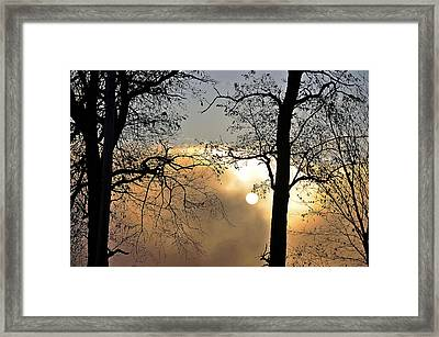 Trees On Misty Morning Framed Print