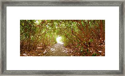 Trees On The Entrance Of A Beach Framed Print by Panoramic Images