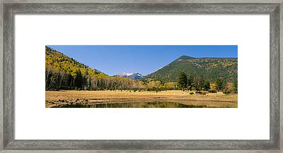 Trees On The Mountainside, Kachina Framed Print by Panoramic Images