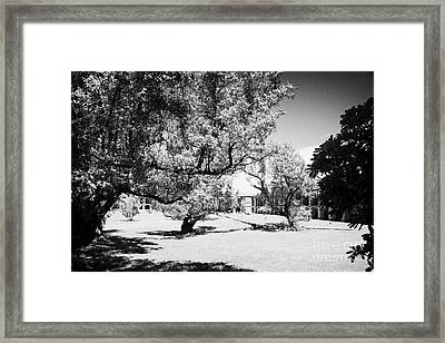 Trees On The Old Parade Ground Inside Fort Jefferson Dry Tortugas Florida Keys Usa Framed Print by Joe Fox