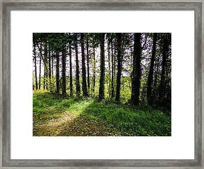 Trees On The Shannon Estuary Framed Print