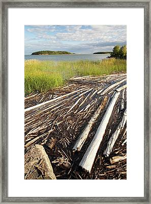 Trees On The Shores Of Lake Athabasca Framed Print by Ashley Cooper