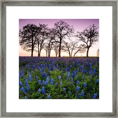 Trees On The Top Of Bluebonnet Hill - Wildflower Field In Lake Somerville Texas Framed Print by Ellie Teramoto