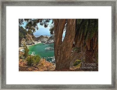 Trees Over Mcway Falls Framed Print