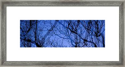 Trees Framed Print by Panoramic Images