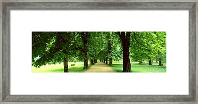 Trees Salzburg Austria Framed Print