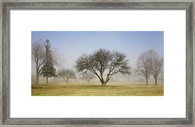 Trees Shrouded In Mist In Springtime Framed Print by Mary Ellen McQuay