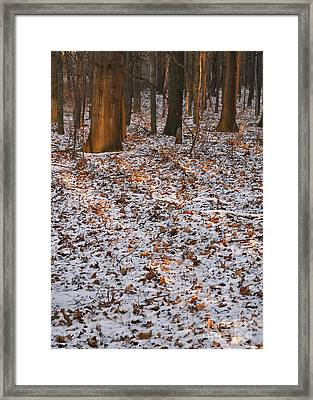 Trees Framed Print by Steven Ralser