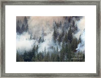 Beaver Fire Trees Swimming In Smoke Framed Print