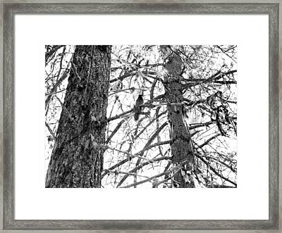 Framed Print featuring the photograph Trees by Tarey Potter
