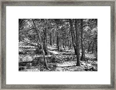 Trees Framed Print by Tony Boyajian