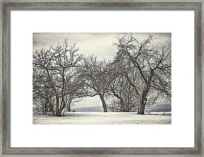 Trees Trees Trees Framed Print by Gary Smith