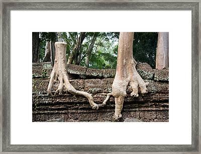 Trees United Framed Print by Artur Bogacki