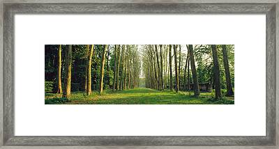 Trees Versailles France Framed Print by Panoramic Images