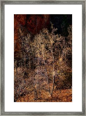 Framed Print featuring the photograph Trees West Fork Trail by Bob Coates